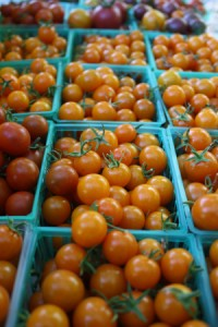Some beautiful sungolds you will receive this week.