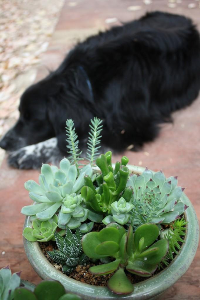a succulent sunday